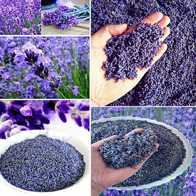 100g Lot Natural Dried French lavender strong fragrance highly aromatic Decors
