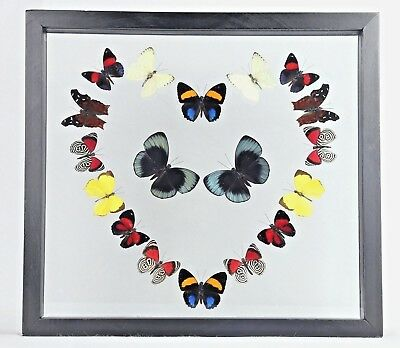 REAL 18 Butterfly Framed Collection Display Art Wall Decor Best Gift Special