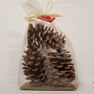 Pine Cone Christmas Decor Rooms in Bloom American Oak Preserving 3 Giant Brown