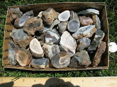 Botswana agate lot D - 3 lbs pounds rough / tumblers tumbling - grey variety
