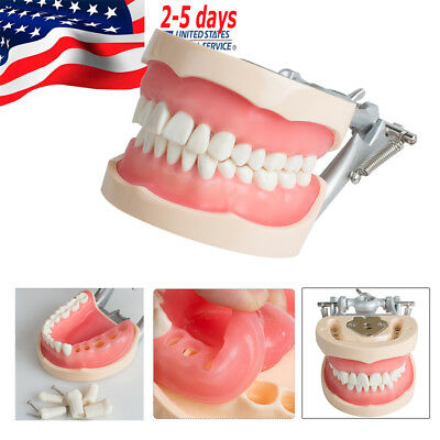 200H Type Removable Teeth Model Dental Universal Plate (ship from USA)