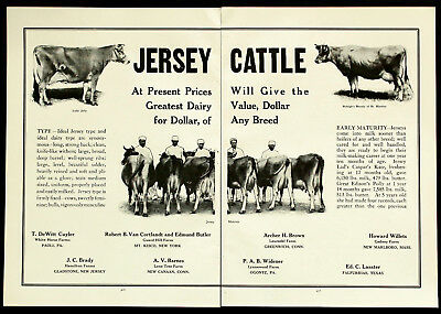 1915 JERSEY DAIRY COWS Farm Cattle for Sale 2-Pg PHOTO Vtg Agriculture PRINT AD
