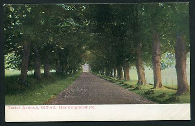 Yester Avenue Gifford Haddingtonshire old vintage postcard