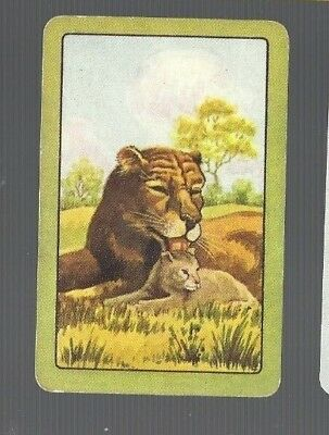 Playing Swap Cards   1 Single   Coles    UN -  NAMED     LION & CUB   822