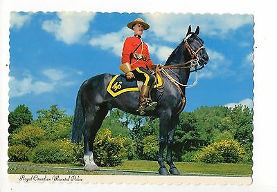Royal Canadian Mounted Police, Horse, Canada, Vintage 4 X 6 Postcard, May