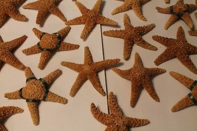 Starfish Large Real Orange Starfish 4 to 7 inches used in Wedding Center Pieces