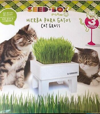 Cat grass seed box