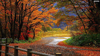 1p Auction Beautiful Trees Road HD Wallpaper Image Penny Auction Collection Free