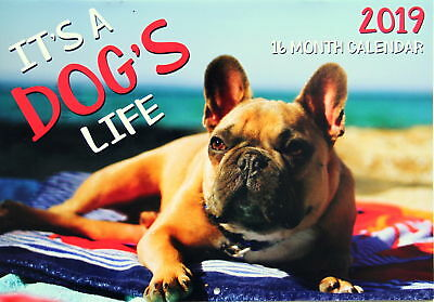 It's a Dog's Lift - 2019 Rectangle Animals Wall Calendar 16 Month New Year Xmas