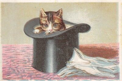 Victorian Trade Card No Advertising Cat Kitten Top Hat White Gloves