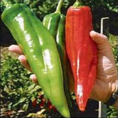 200 pcs Big hot chili peppers Pepper Seeds fruit and vegetable seed for flower p