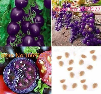 100 seeds Purple Cherry Tomatoes Balcony Fruits Vegetables Potted Bonsai Potted