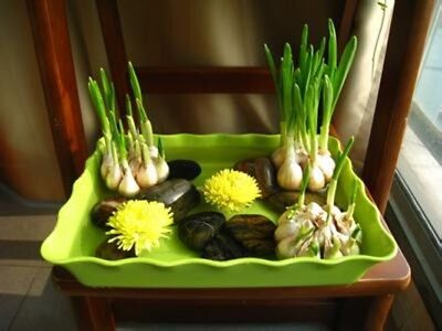 100Pcs Garlic Seeds Pure Natural And Organic Vegetable Seeds Healthy And Delicio