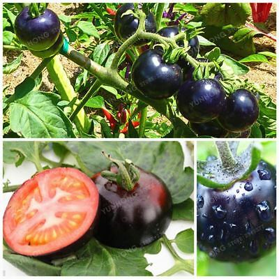 100 Pcs /Bag Black Tomato Seeds Vegetable And Fruit Resistant To Diseases Orname