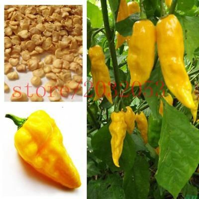 100 rare yellow pepper seeds Chilli Habanero Devils Tongue Yellow best vegetable