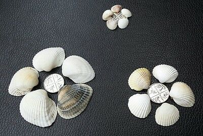 Sea Shells Beach Beads Wedding Decoration Clam Craft SeaShells 80g ON SALE