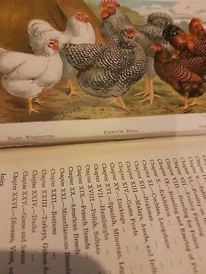 The Practical Poultry Keeper By Lewis Right