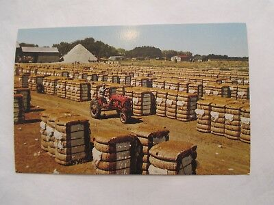 Bales of Cotton Ready for Market cotton gin background tractor Postcard