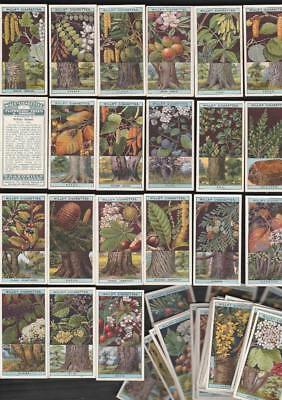 Full Set 50 Flowering Trees & Shrubs By Wills 94 Yrs Old Set  Cigarette Cards