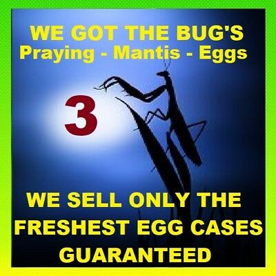 3 Super Duper Fresh Chinese Praying Mantis Egg Cases ! NATURAL PEST CONTROL