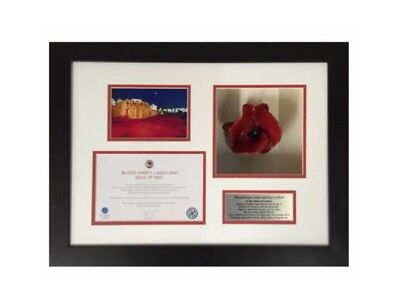 Display Case Frame For Your Own Tower Of London Ceramic Poppy *Looks Fabulous*