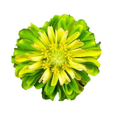 Silk Flowers Yellow Zinnia Artificial Set of 6 Nearly Natural 2249-S6-YL 30-in