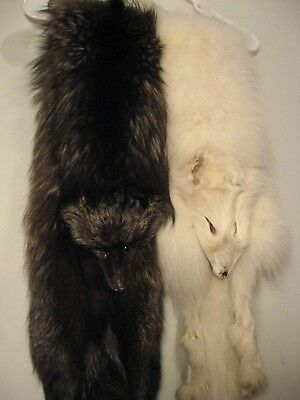 TWO FOX FUR PELTS vintage Arctic white fur & Black Sliver Fluffy w Eyes DISPLAY
