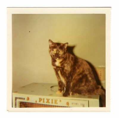 Cat In A Bread Box Unique PHOTO CAT SITTING In Vintage Kitchen Old Stove 60 Snapshot 60