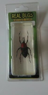 Real Bugs (Collect A Case) #20 Red Palm Weevil