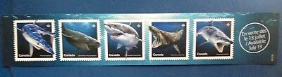 2018 Canada Sharks Promotional Counter Card Science Marine Predator Jaws Fish