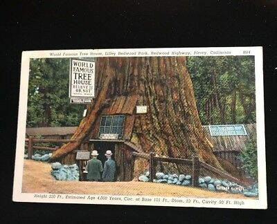 Tree House at Lilley Redwood Park near Piercy CA c1940s Linen