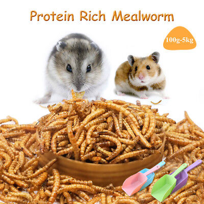 Hamster Bird Food Protein Rich Mealworm Fish Organic Dried Worm Livefood +Shovel