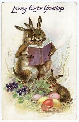 Tuck EASTER BUNNY RABBITS Reading Book Decorated Eggs Postcard 1908 Embossed