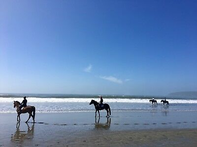 Digital Picture/Photo/Image/Wallpaper/Desktop Email Only LANDSCAPE OCEAN HORSES