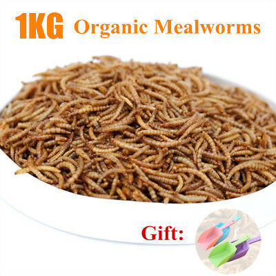 1kg Wild Bird Food Protein Rich Mealworm Pet Fish 100%Natural Organic Dried Worm