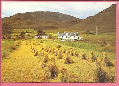 Harvesting corn at Quiraing, Isle of Skye, Scotland postcard. J. Arthur Dixon.