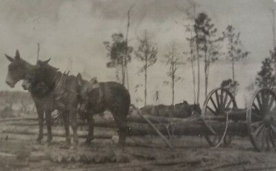 VTG RPPC Pair of Mules Clearing Land Antique Photo AZO Post Card
