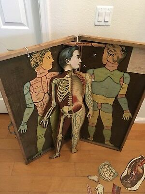 Smith'S American Human System Anatomical Regions Manikin Rare!!!!!