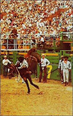 Western: Cowboys Riding Bucking Bronco, Rodeo, TX. African American. 1960s.