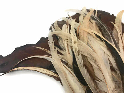 """1 Pack -  8-12"""" Natural Beige Mix Coque Tail Strung Rooster Feathers 0.25 Oz."""