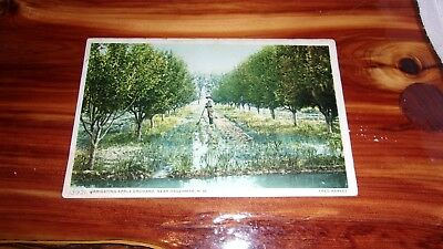 Fred Harvey Hagerman, New Mexico Postcard-Irrigating Apple Orchards
