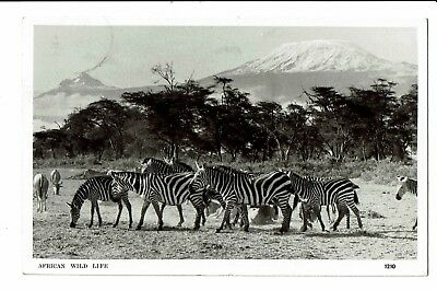 CPA - Carte postale-Afrique -Kenya - African wild life - - S2888