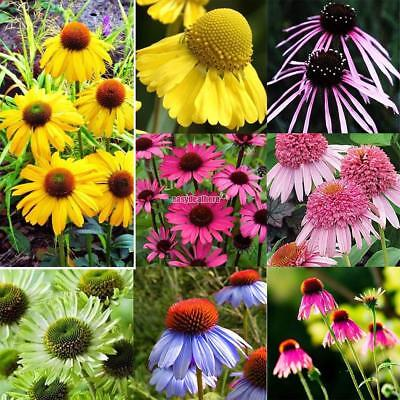 12 Types Echinacea purpurea Purple seeds Perennials flower Home Garden Plant