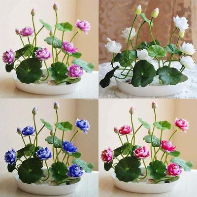105 Seeds 5 Colors Mix Bowl Lotus Flower Seed Water Aquatic Plants