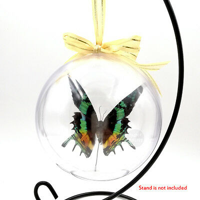 Real Madagascar Sunset Moths Butterfly Taxidermy 3D View Christmas Tree Ornament