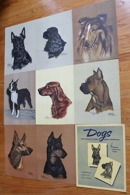 Gladys Emerson Cook Dogs Pure-Bred Favorites - 8 Prints and Portfolio