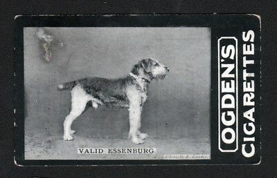 DOG Airedale Terrier (Named) Photo Trading Card, 1902
