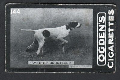 DOG English Pointer (Named Champion Intl Field Trial) 1902 Photo Trading Card