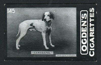 DOG English Pointer (Named Champion Intl Field Trial) Photo Trading Card, 1902