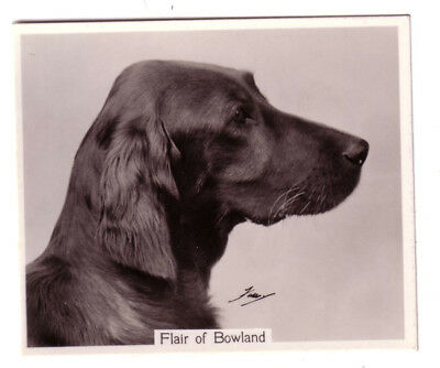 DOG Irish Setter (Named) Large Photo Trading Card, 1938
